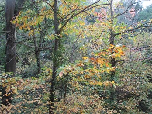 automne 2013 060.jpg
